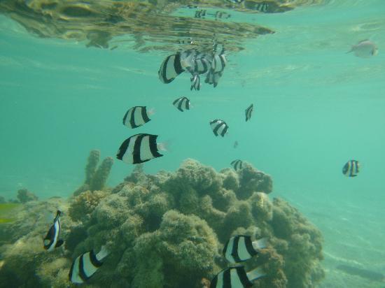 Aitutaki Beach Villas: Snorkelling 20m from the cottage 
