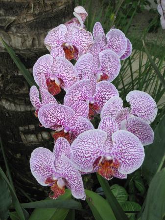 Vivenda Paraty: Loved the Orchids in Johns garden