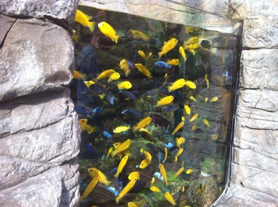 Wolf fish picture of bristol aquarium bristol tripadvisor for Outdoor aquarium uk