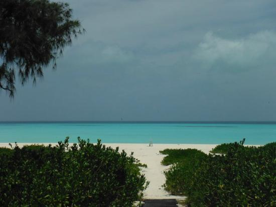 Midway Atoll: North Beach