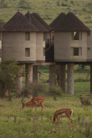 Dream Kenya Safaris: Salt Lick Lodge Taita Kenya