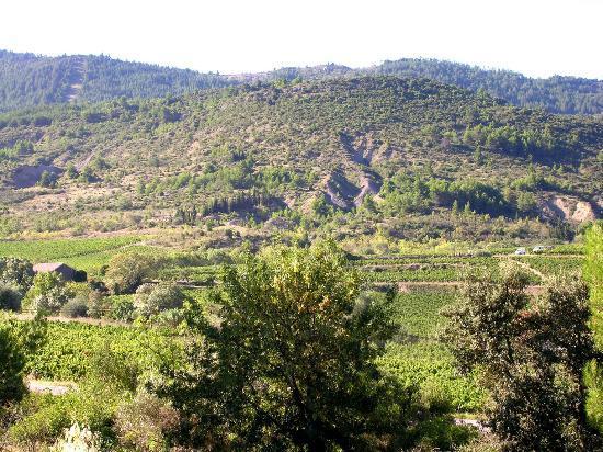 Domaine marselan : vue du vignoble