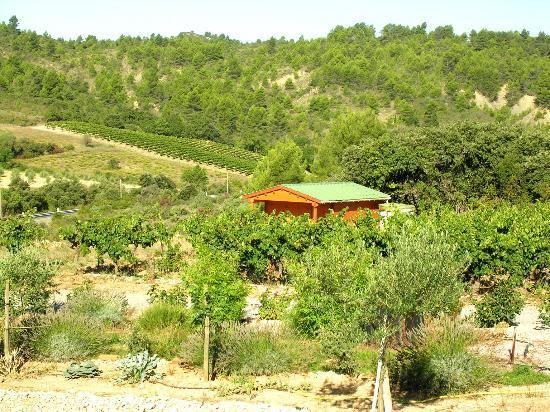 Domaine marselan : cabanon dans la propriete