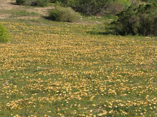 Oudrif: Fields of daisies