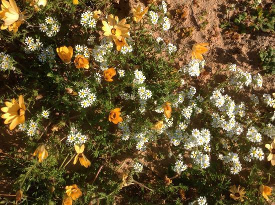 Oudrif: More flowers