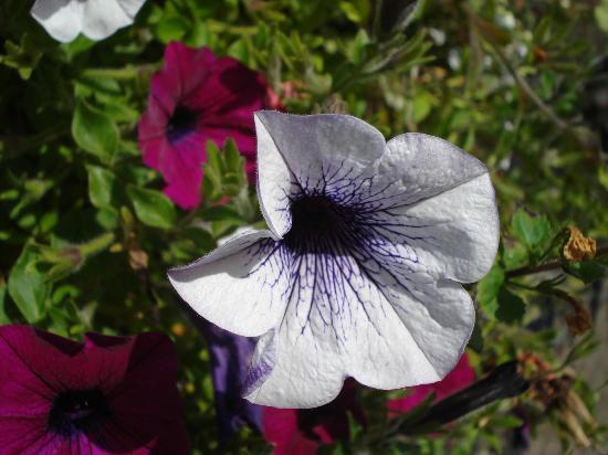 Russell Tea Room: Garden flower