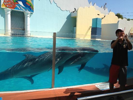 Kobe City Suma Marine Aquarium : いるかショー