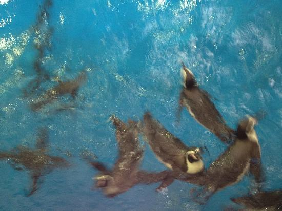 Kobe City Suma Marine Aquarium : ペンギン食事中