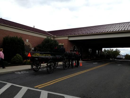 Shady Maple Smorgasbord: carriage rides