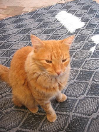 Riad La Porte Rouge: Max, le chat le plus malheureux du maroc ((-;
