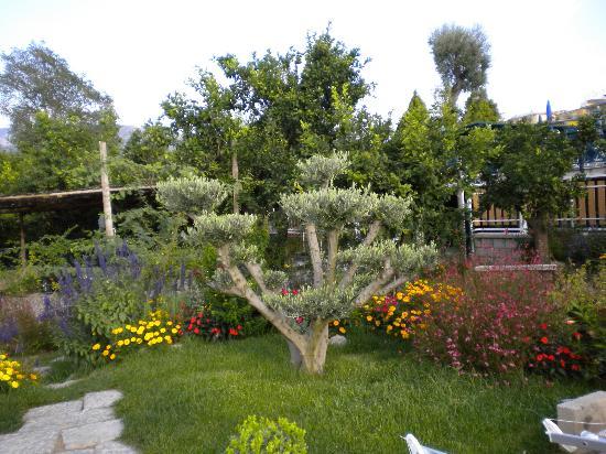 B&B Il Roseto: giardino 1