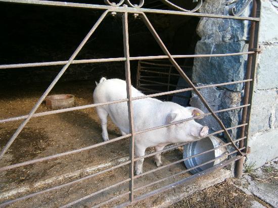 Ty Mawr Farm: Sally