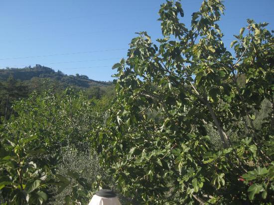 View of the Countryside - Tenuta di Lupinari