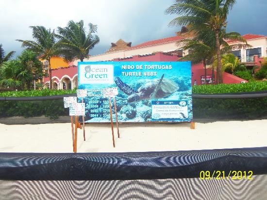 Ocean Coral & Turquesa: 4