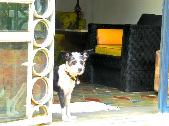 El Angel Azul Hacienda: The lovely house dog