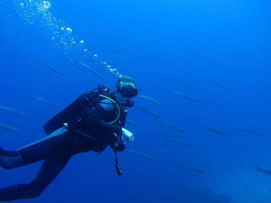 GoDive Mykonos PADI Diving Resort: Me and the fish :)