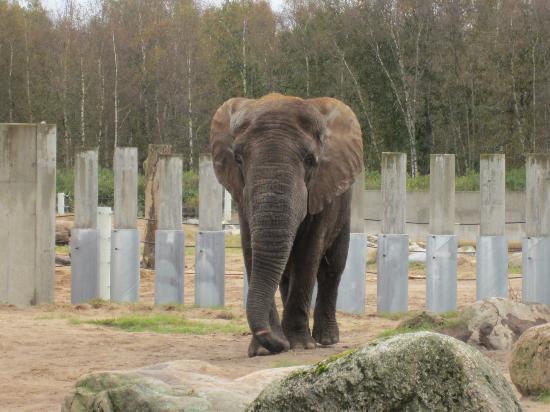 Carl The Elephant Kuva Tallinn Zoo Tallinna Tripadvisor