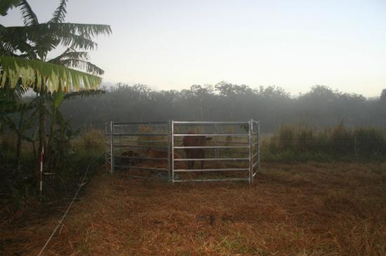Hill Top Farmstay Accommodation Cooktown: Morning on the farm