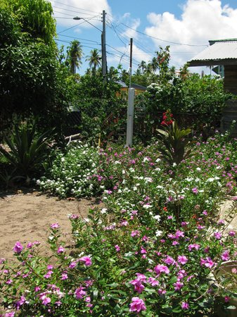 Mayaro, Trinidad: The FLOWER POWER SHOWER - a must try experience