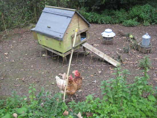 The Spinney Country Guest House: Chicken's