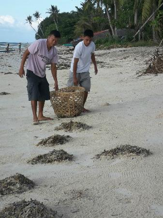 Amarela Resort: Amarela staff clean the beach every morning