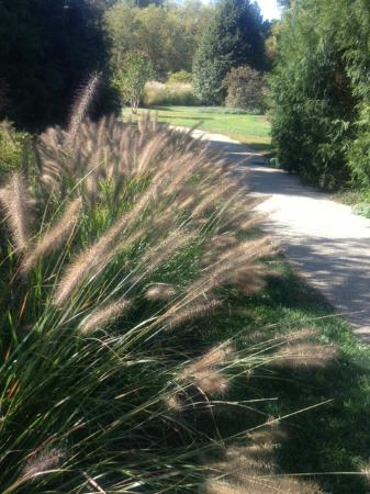 Fernwood Botanical Garden and Nature Preserve: Grasses along the path