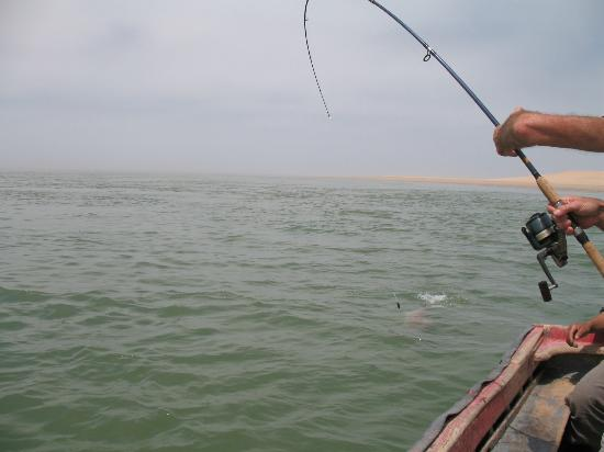 La Courbine d'Argent: action de pêche lagune