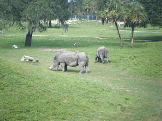 حدائق بوش: Rhinos