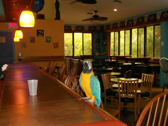 The Lost Parrot : Polly wants a Cocktail