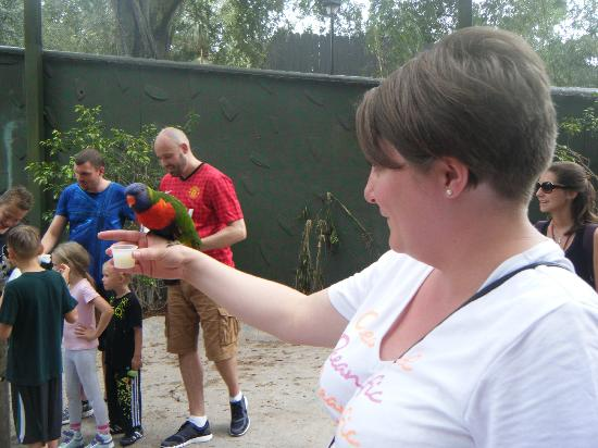 Busch Gardens: Me with a lorikeet