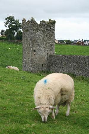Lawcus Farm Guest House: Nearby Kells Priory