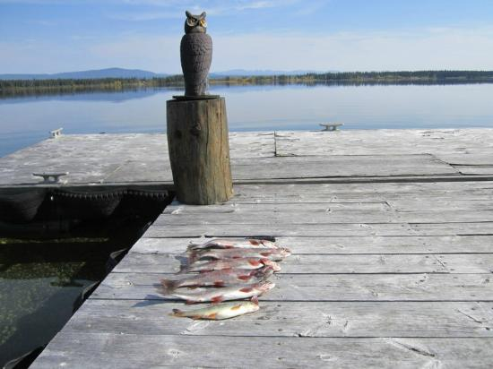 Anahim Lake, Kanada: Owl Ornament Guarding Trout