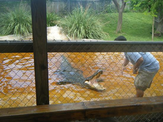 Sawgrass Recreation Park: Alligator