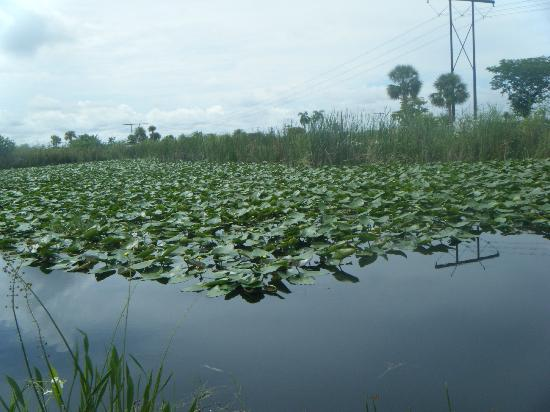 Sawgrass Recreation Park: Everglades