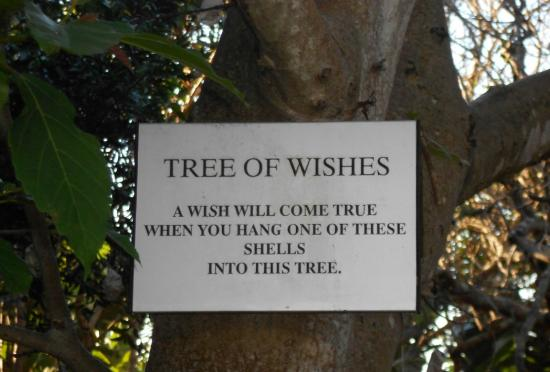 Days At Sea Beach Lodge: wishtree