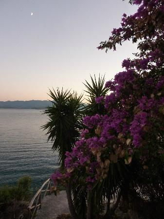 Pounda Paou: bougainvillea in sunset