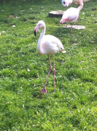 Krakow Zoo (Ogrod Zoologiczny): Animals