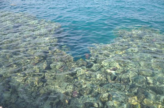 Jaz Dar El Madina: Vista del Reef dal pontile