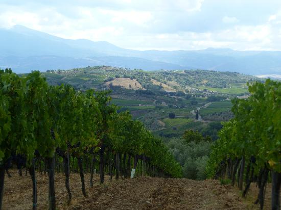 Wine Tour in Tuscany: what a view