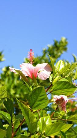 B&B Pietradonica: Blütentraum