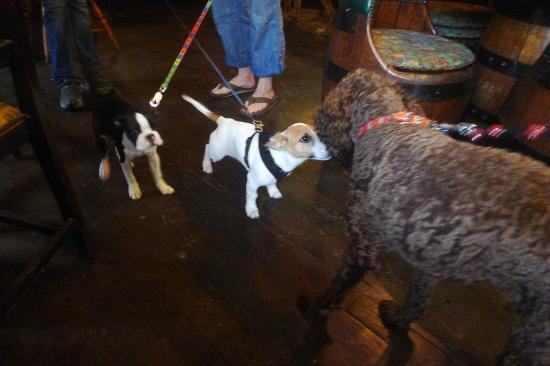 The Plough and Harrow: Jack Russell meets Labradoodle in the pub