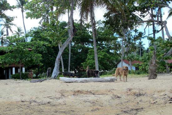 Grand Bahia Principe El Portillo: Awesome dogs, kept us company all the way to Las Terrenas