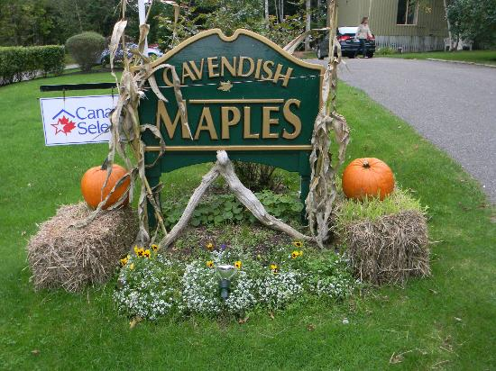 Cavendish Maples Cottages: Fall is beautiful at Cavendish Maples