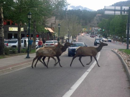 The Haber Motel : Elk in front of Haber Motel
