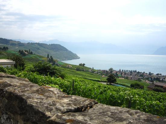 Villa Lavaux Boutique B&B: Beautiful view of the surrounding vineyards