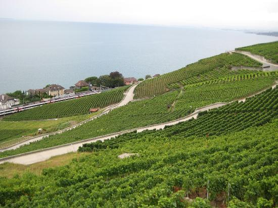Villa Lavaux Boutique B&B : More of the surrounding vineyards!
