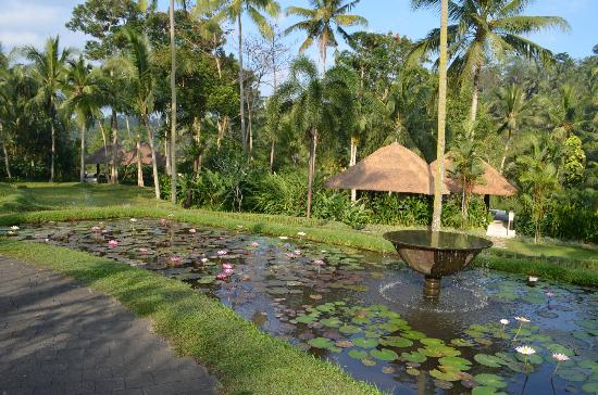 Four Seasons Resort Bali at Sayan: Lily pond