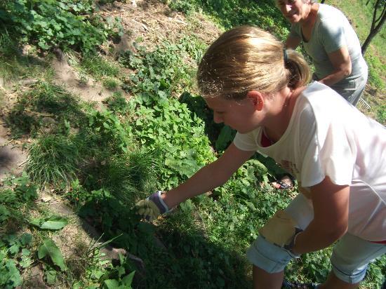 Sapori e Saperi: Picking nettles for ravioli!
