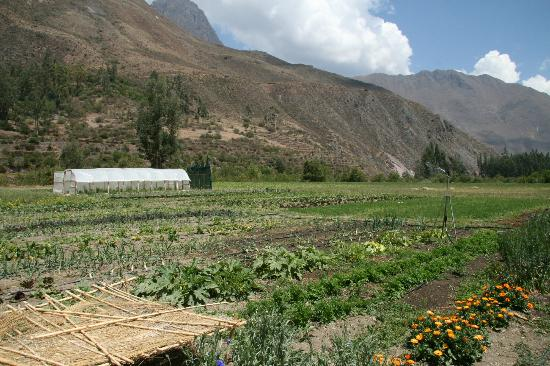 ‪‪El Albergue Ollantaytambo‬: The inn's very own farm‬
