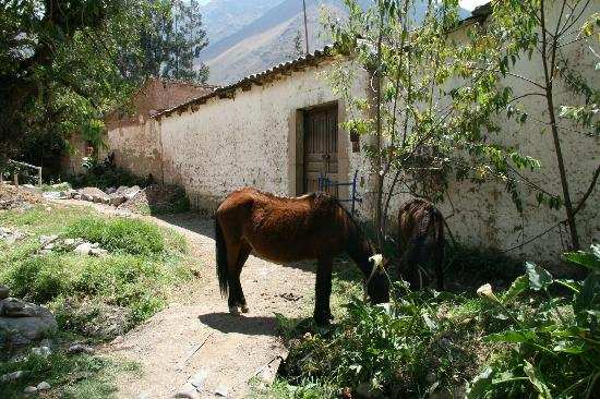 El Albergue Ollantaytambo: Donkeys hanging around the grounds of the hotel's farm